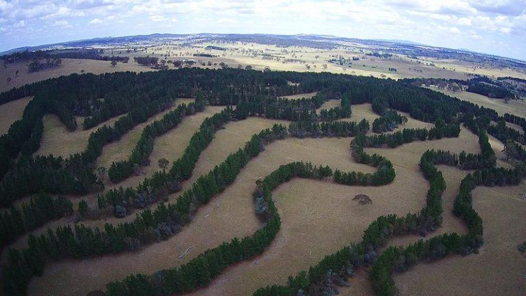 Agroforestry is de moeder van voedselboslandbouw