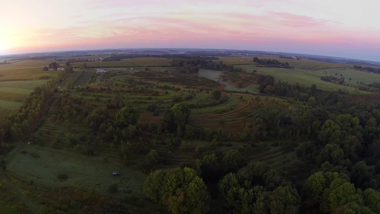 Permacultuur: het geboortedorp van voedselbossen