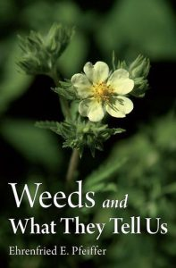 Weeds and what they tell us - food forest institute - foodforest - voedselbos - permacultuur - agroforestry