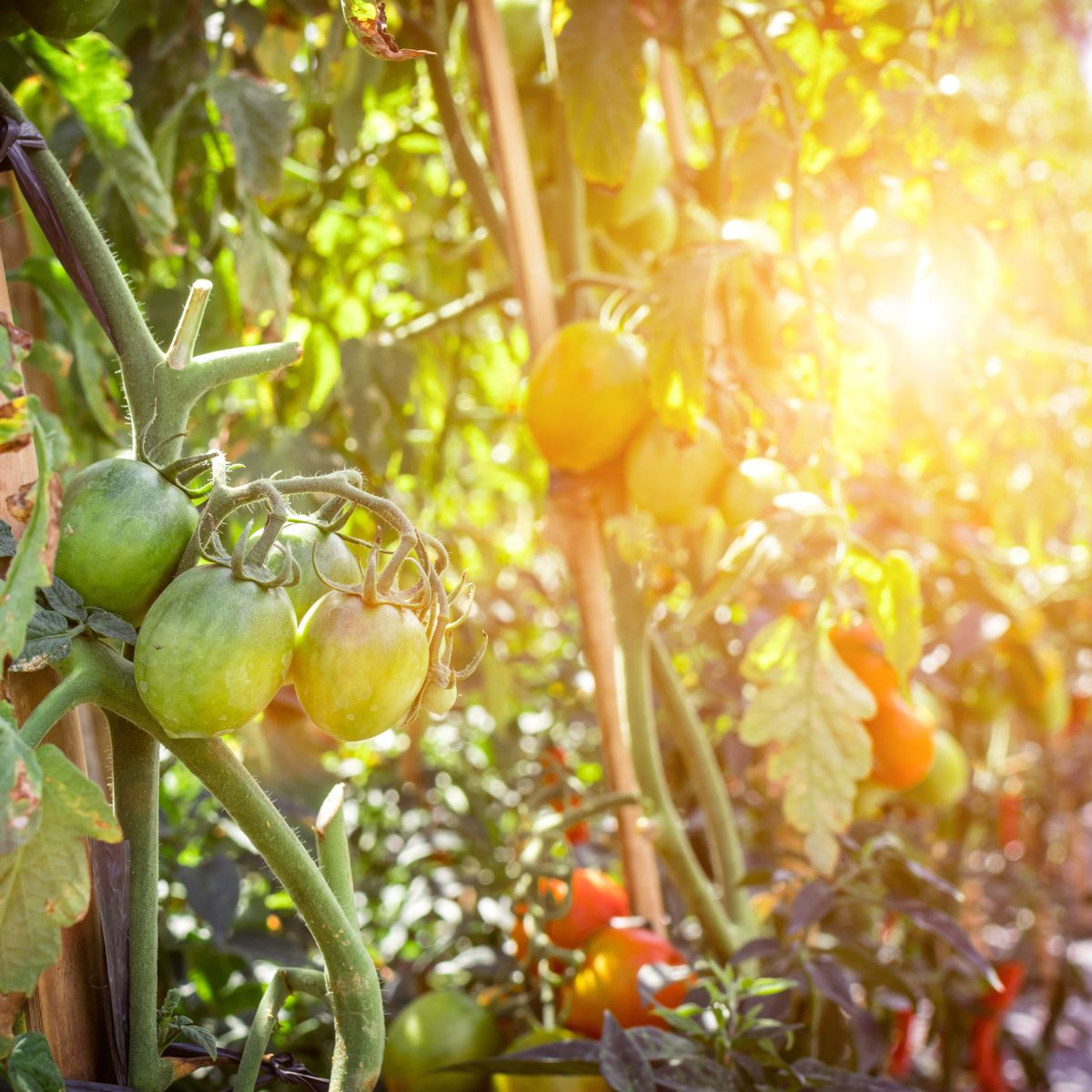 Korte keten als overlevingsmodel van de landbouw?