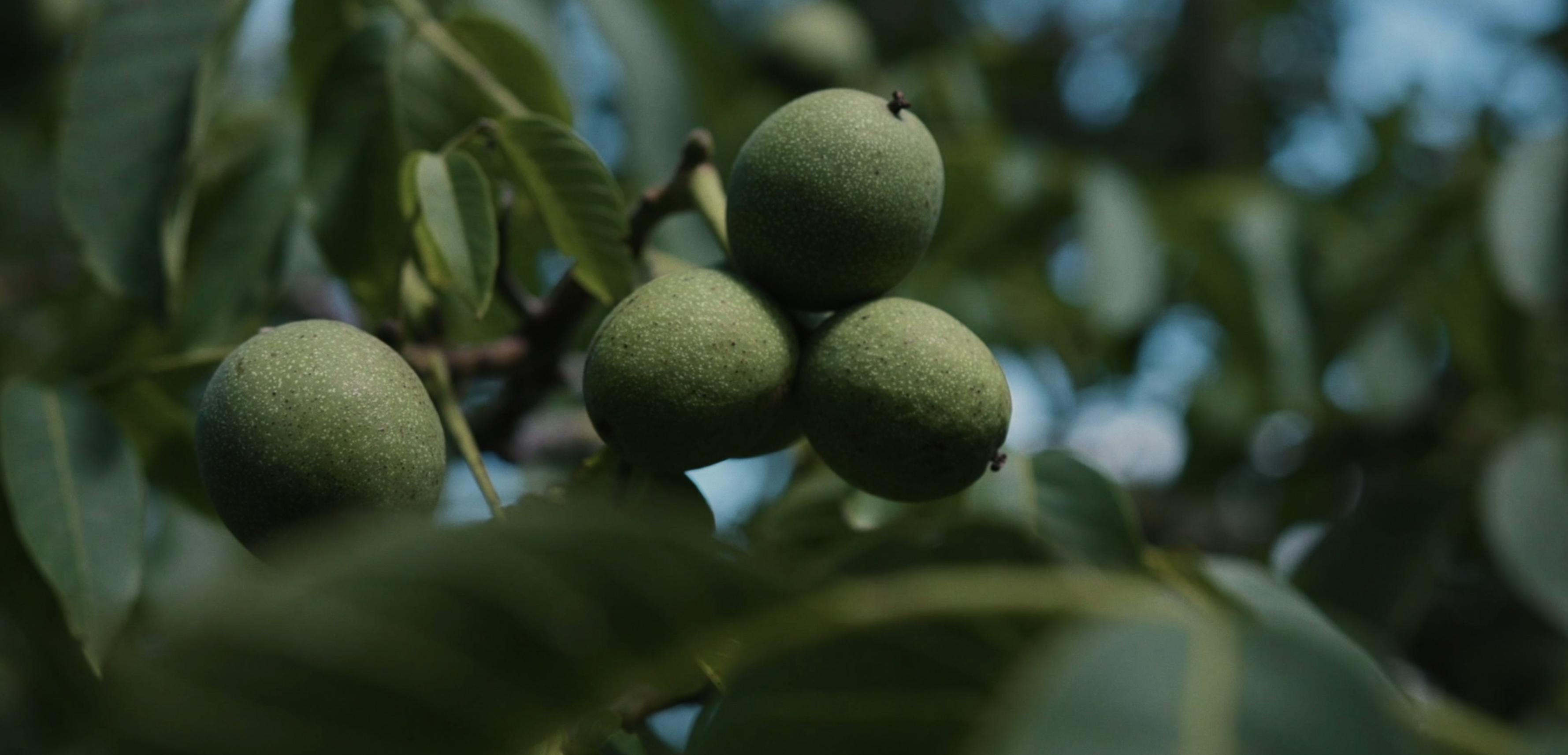 Hoe voedselbossen een sleutelrol kunnen spelen voor 4.000 hectare extra bos