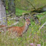 Rewilding - Food Forest Institute
